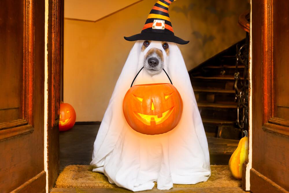 тыква на хэллоуин купить